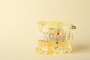 Educational model of oral cavity with teeth on color background. Space for text