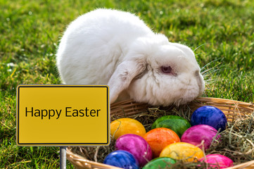 Happy Easter Sign with Rabbit