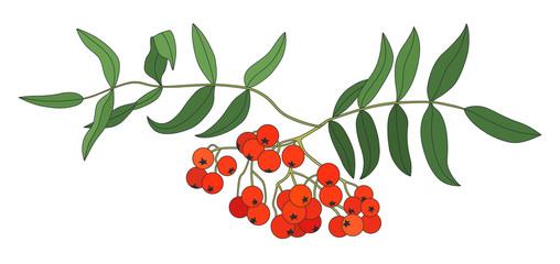 rowan branch in color