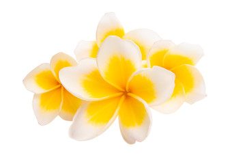 Photo sur Plexiglas Frangipanni frangipani isolated