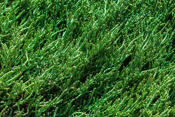 Green grass background or pattern