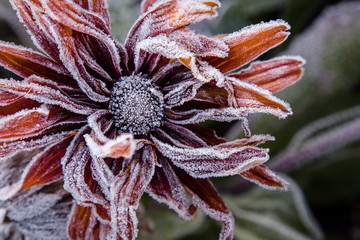 Close up of frozen flower