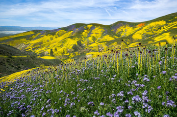 Mountains in super bloom, California