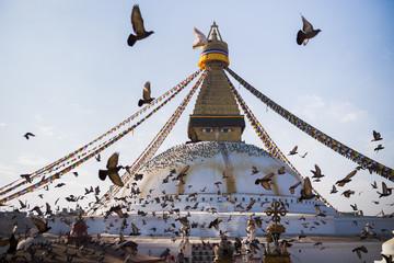 Brids flock around a Buddhist temple in Kathmandu