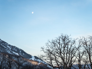 Silhouette of trees against the sky and mountains in the afternoon on the Rosa Khutor from the hotel balcony
