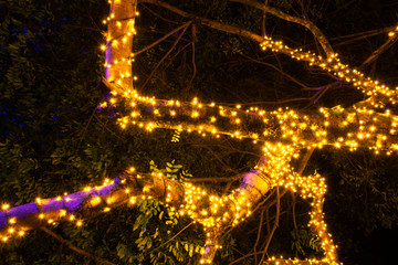 Branches with Christmas lights outdoors in natural tree, party night and color in tropical area of ​​Guatemala.
