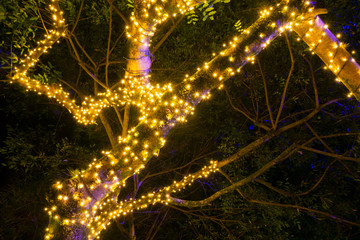 Branches with Christmas lights outdoors in natural tree, party night and color in tropical area of Guatemala.