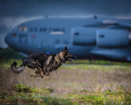 Police K9 running on military runway