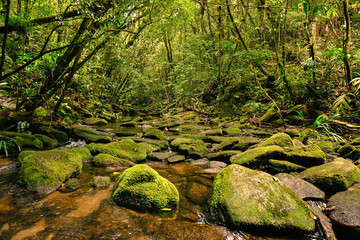 Well preserved stream in atlantic forest, mossy rocks in foreground. Serra do Mar State Park (PESM), Sao Paulo, Brazil