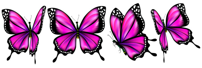 beautiful pink butterflies, isolated  on a white
