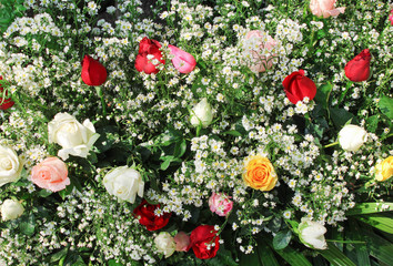 Colorful multicolored bouquet ornamental of  roses blooming patterns group with white daisy texture for background