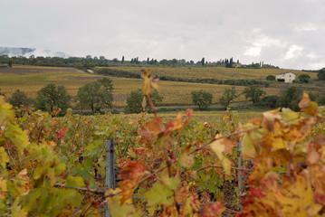 Viti Uva Toscana Chianciano Terme Italia Campo