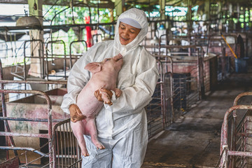 Asian veterinarian holding for moving the pig in hog farms, animal and pigs farm industry