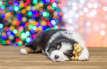 Australian shepherd puppy sleeping with toy bear with Christmas tree on background. Empty space for text