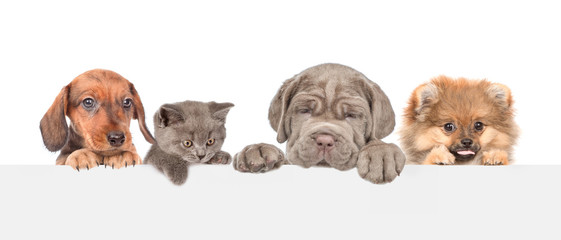 Group of dogs and cats above empty white banner. isolated on white background. Empty space for text
