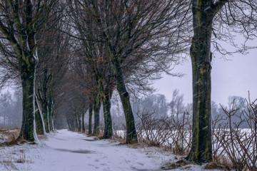 Heavy snow - Im Schneetreiben