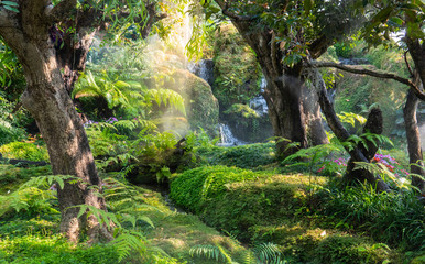 Garden landscaping like the rain forest with waterfall and moss as decoration.