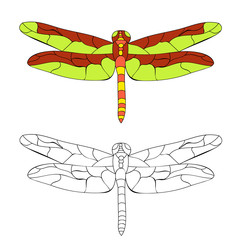 dragonfly sketch, coloring book