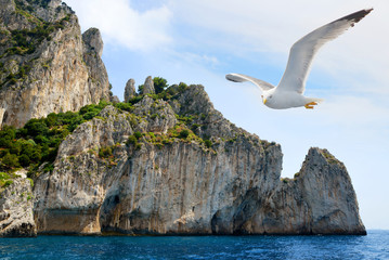 Seagull flying near the Capri Island. Mediterranean Sea - Italy, Europe.