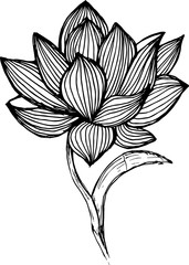 Lotus illustration made by freehand lines. Tattoo idea.