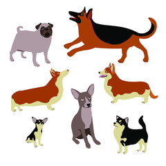 Cartoon dogs of different breeds and sizes. Cute vector animals on a white background. Pug dog, Sheep dog, Welsh Corgi, Chihuahua, mongrel