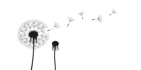 dandelion silhouette with flying seeds isolated on white background vector illustration EPS10