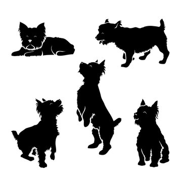 Set of Yorkshire terrier silhouettes - isolated