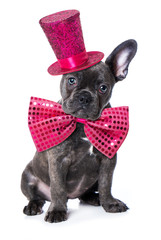 French bulldog puppy with pink hat and tie isolated on white background