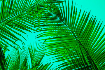 Foto op Canvas Tropische Bladeren Texture of Green Leaf of Palm Tree for Natural Abstract Background.