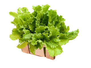 Fresh and green lettuce on white background, food concept