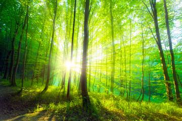 Wall Murals Forest forest sunlight