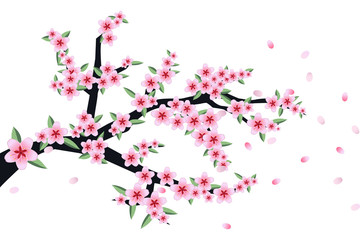 vector of sakura or cherry blossoms flowers branch