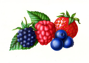 forest fruits, raspberry, blackberry, strawberry, blueberries and green leaves, illustration