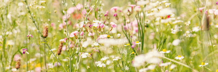 Header mit Wildblumen, Blumenwiese und Blumen Wall mural