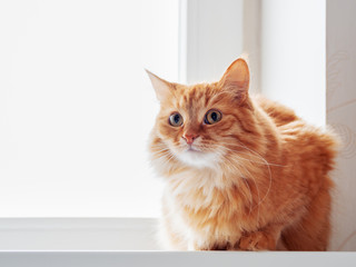 Cute ginger cat siting on window sill and waiting for something. Fluffy pet looks curious.