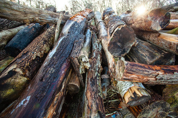 large pile of raw, old logs and firewood
