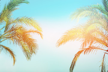 Two bending palm trees on toned vanilla pink peachy sky golden sun flare. Frame border composition. Tropical nature background. Beach vacation wanderlust. Copy space