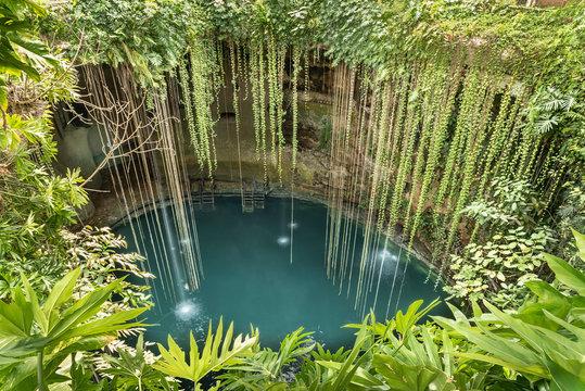 Rainforest cenote found in Yucatan peninsula. Deep fresh water filled holes found in Yucatan, Mexico