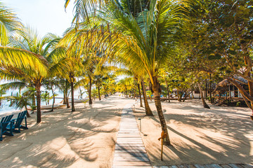 Beach walkway line with palm trees