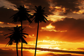 Coconut silhouette on sunset texture template background