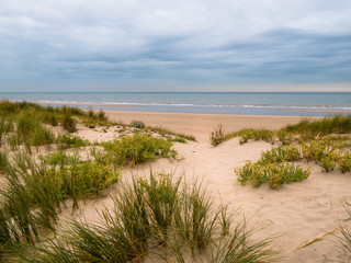 Sand dune with vegetation at the beach with view towards the North Sea