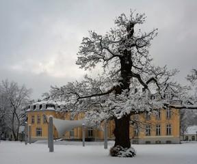 Wnterbaum in Leverkusen Schloss Morsbroich