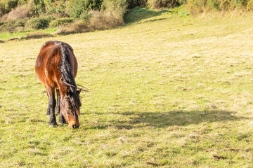 Beautiful brown horse with a long black mane in the spring field