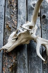 Elk Skull Decoration