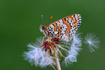 Fond de hotte en verre imprimé Papillon Closeup beautiful butterfly sitting on flower