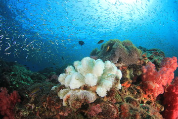 Coral bleaching climate change