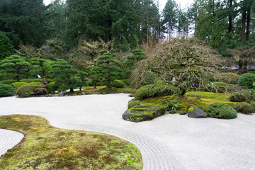bonzai tree in sand garden