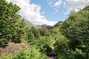 Schottland - Glen Nevis - Wanderweg zur Paddy's Bridge