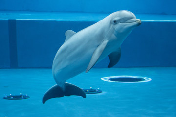 Spoed Fotobehang Dolfijn The dolphin in the aquarium