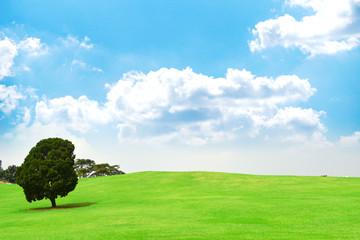 계절 풍경 식물 오브젝트 자연 숲 백그라운드 이미지 Fotobehang